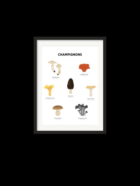 Affiche – Champignons