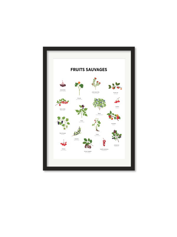Affiche – Fruits sauvages