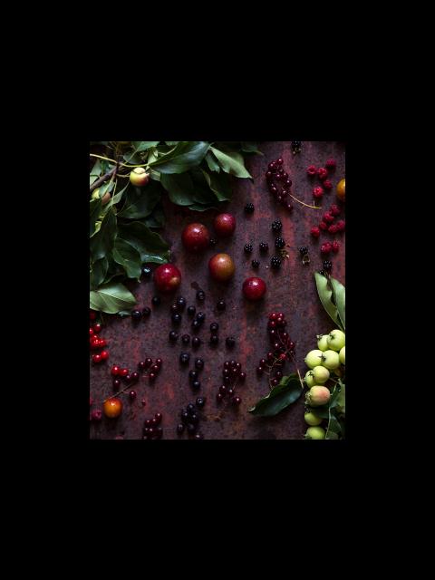 Webinaire sur la cueillette des plantes sauvages – août