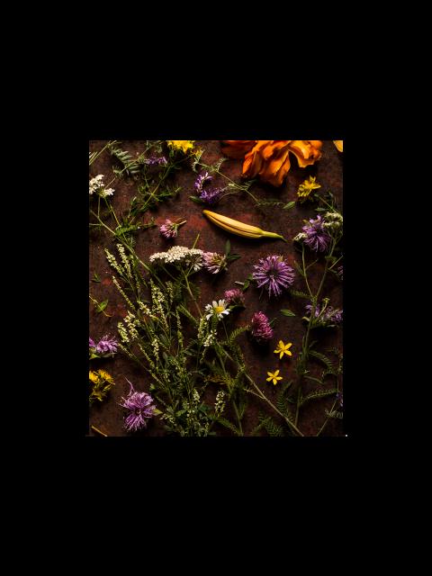 Webinaire sur la cueillette des plantes sauvages – juin