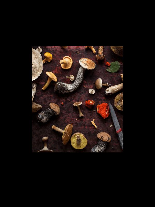 Webinaire d'introduction à la cueillette des champignons sauvages