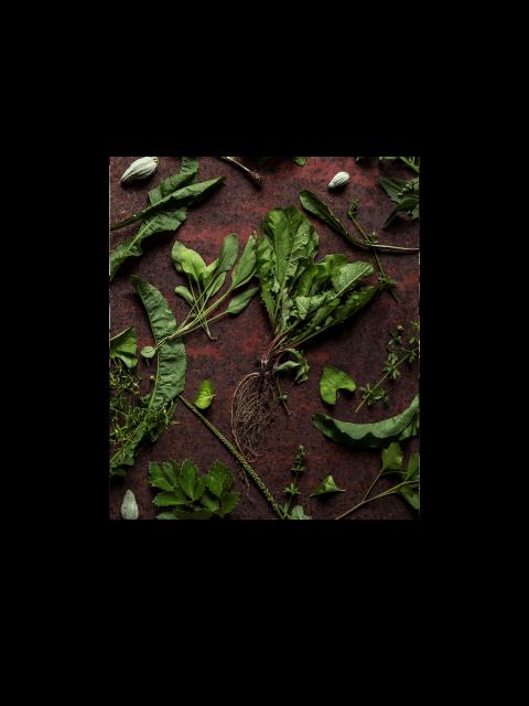 Webinaire sur la cueillette des plantes sauvages – mai