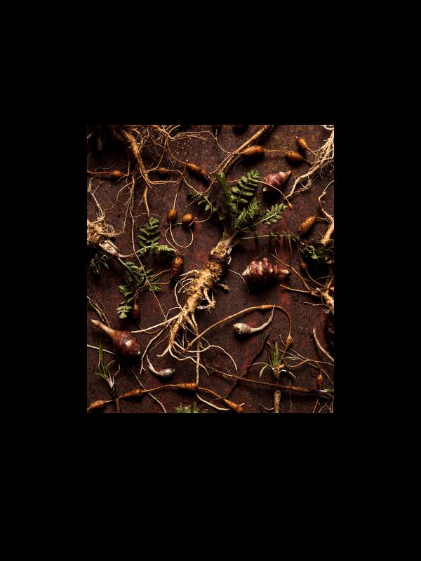 Webinaire sur la cueillette des plantes sauvages – septembre