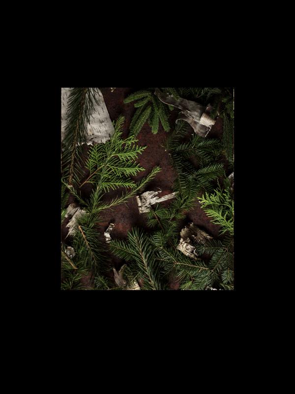 Une saison en forêt – 5 webinaires sur la cueillette des plantes sauvages